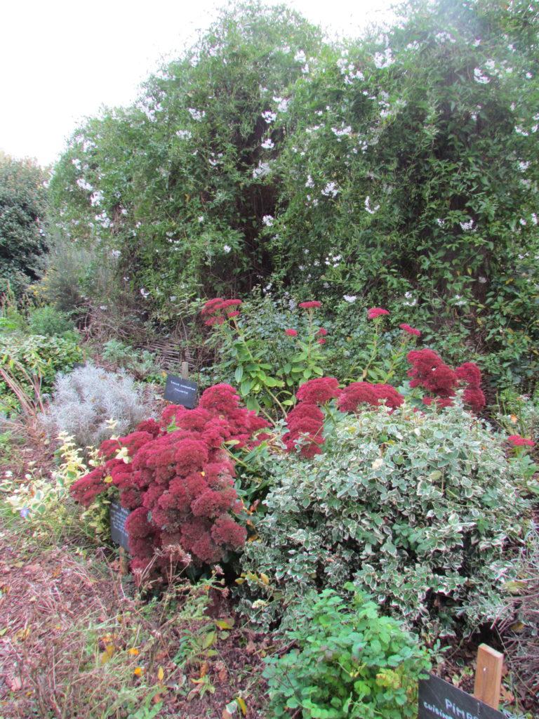 talus plantes aromatiques